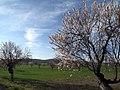 Campo de Montiel (512654092).jpg