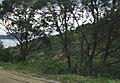 Campomoro aperçu furtif de la tour.jpg