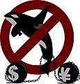 Captiva orca cetacean in zoological park dolphinarium animal rights 01.jpg