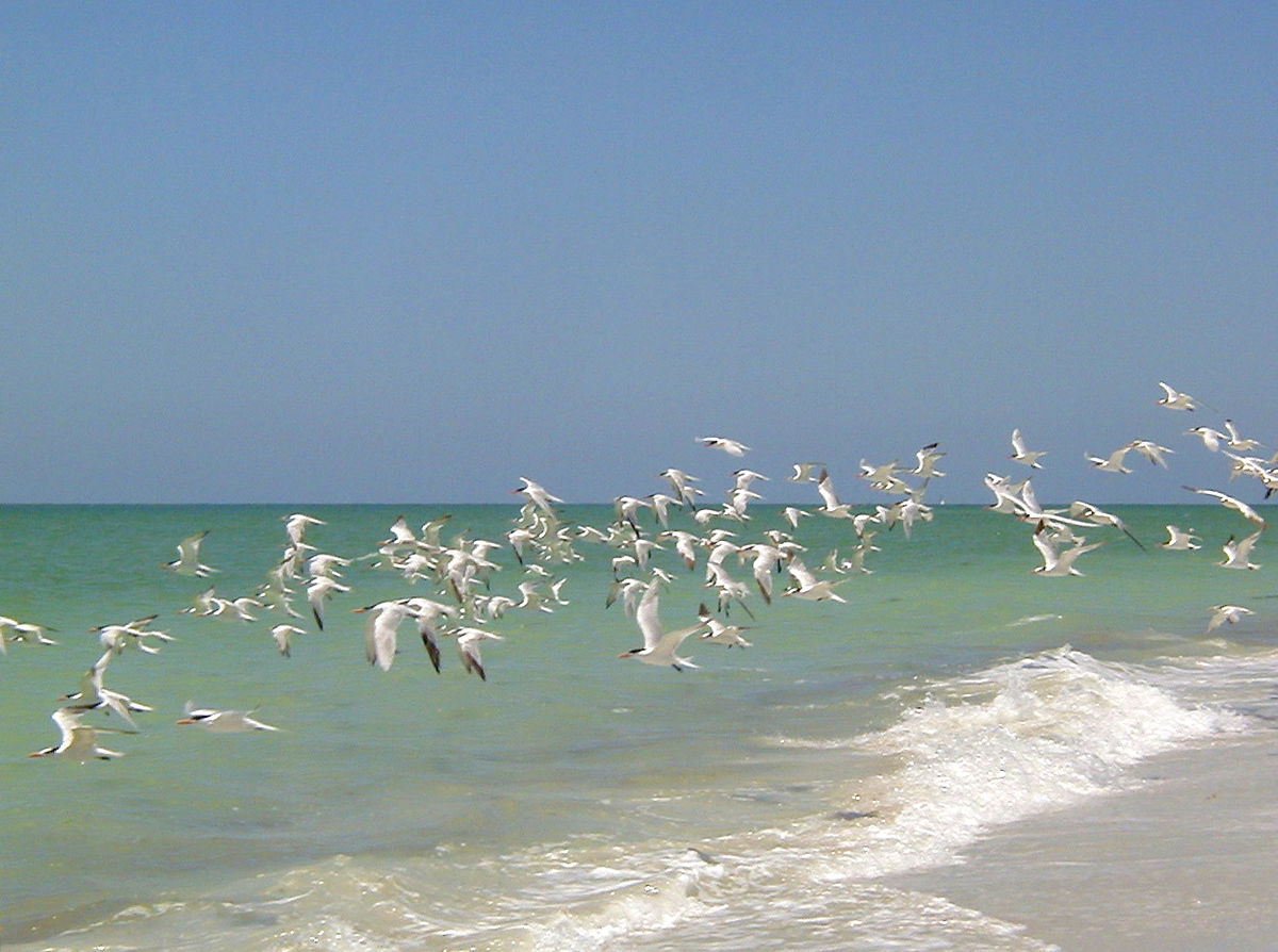 Sanibel Island Florida: Captiva Island