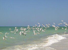 Wiki: Captiva Island Florida is a great place to live and play!