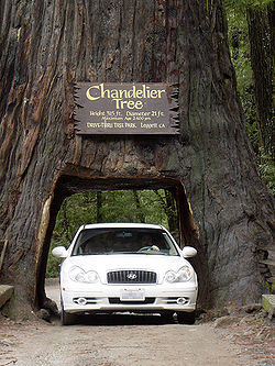 A car drives through Leggett's Drive-Through Chandelier Tree.
