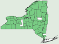 Carex communis var communis NY-dist-map.png