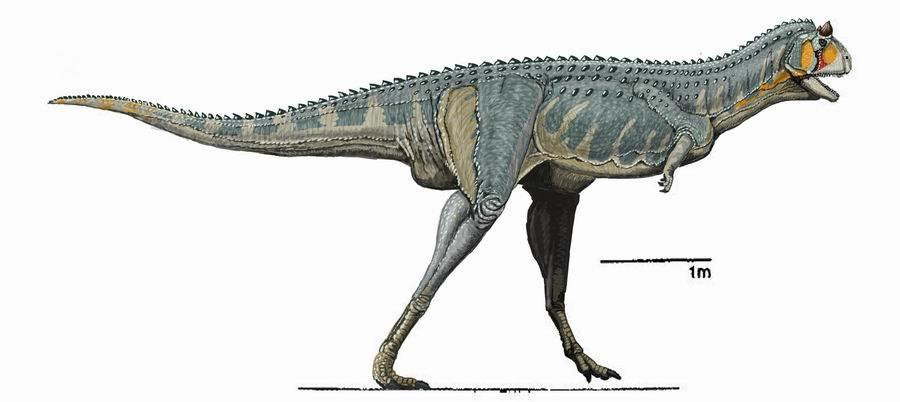 Carnotaurus DB