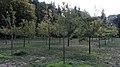 Celler Waldfriedhof Ribbeck's Garten 8680.jpg