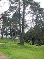 Cerro Mutrun, Constitución, Chile - panoramio.jpg
