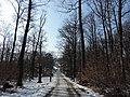 Cesta k vyhlliadkovej veži - panoramio.jpg