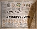 Chart showing the basic elements of phrenology, physiognomy Wellcome V0009525.jpg