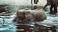Cheerful baby elephant (Unsplash).jpg