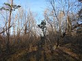 Cherkas'kyi district, Cherkas'ka oblast, Ukraine - panoramio (1153).jpg