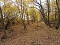 Cherkas'kyi district, Cherkas'ka oblast, Ukraine - panoramio (377).jpg