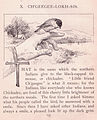 Chickadee 2.jpg