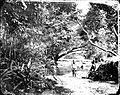 Children playing in a stream, Singapore Wellcome L0018799.jpg