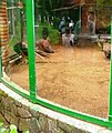 Chim trĩ Việt Nam tại Sở thú.JPG