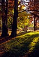 "Cincinnati - Spring Grove Cemetery & Arboretum ""Ceder Lake Area - Morning Light Through Trees"" (5141890576).jpg"