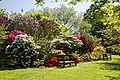 City of London Cemetery - Mixed rhododendron bed and benches.jpg