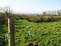 Clabby Forest - geograph.org.uk - 303795.jpg