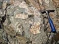 Clast-rich impact pseudotachylite (Sudbury Breccia, Paleoproterozoic, 1.85 Ga; Windy Lake Northwest roadcut, Sudbury Impact Structure, Ontario, Canada) 2 (46819356305).jpg