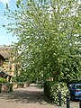 Clippers Quay in Bloom Summer 2003 Falcon Way - geograph.org.uk - 604664.jpg