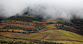 Cloud and fog in Douro vineyards.jpg