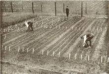 Clover-Trials-1902.jpg
