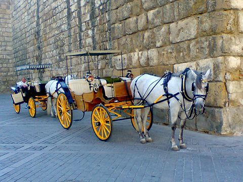 Seville horse carriage tour