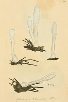 Coloured Figures of English Fungi or Mushrooms - t. 159.jpg