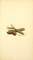 Coloured Figures of English Fungi or Mushrooms - t. 17.png