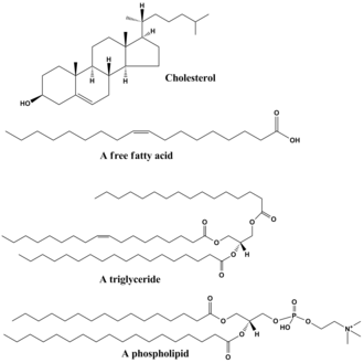 Lipid - Structures of some common lipids. At the top are cholesterol The middle structure is a triglyceride composed of oleoyl, stearoyl, and palmitoyl chains attached to a glycerol backbone. At the bottom is the common phospholipid phosphatidylcholine.
