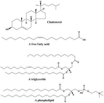 biological importance of lipids Lipid are made up a wide variety of molecules, but they all contain carbon,  hydrogen and oxygen with a much higher percentage of carbon and.