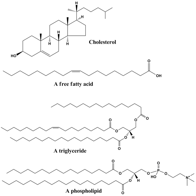 What Are The Four Categories Of Biochemical Molecules Of