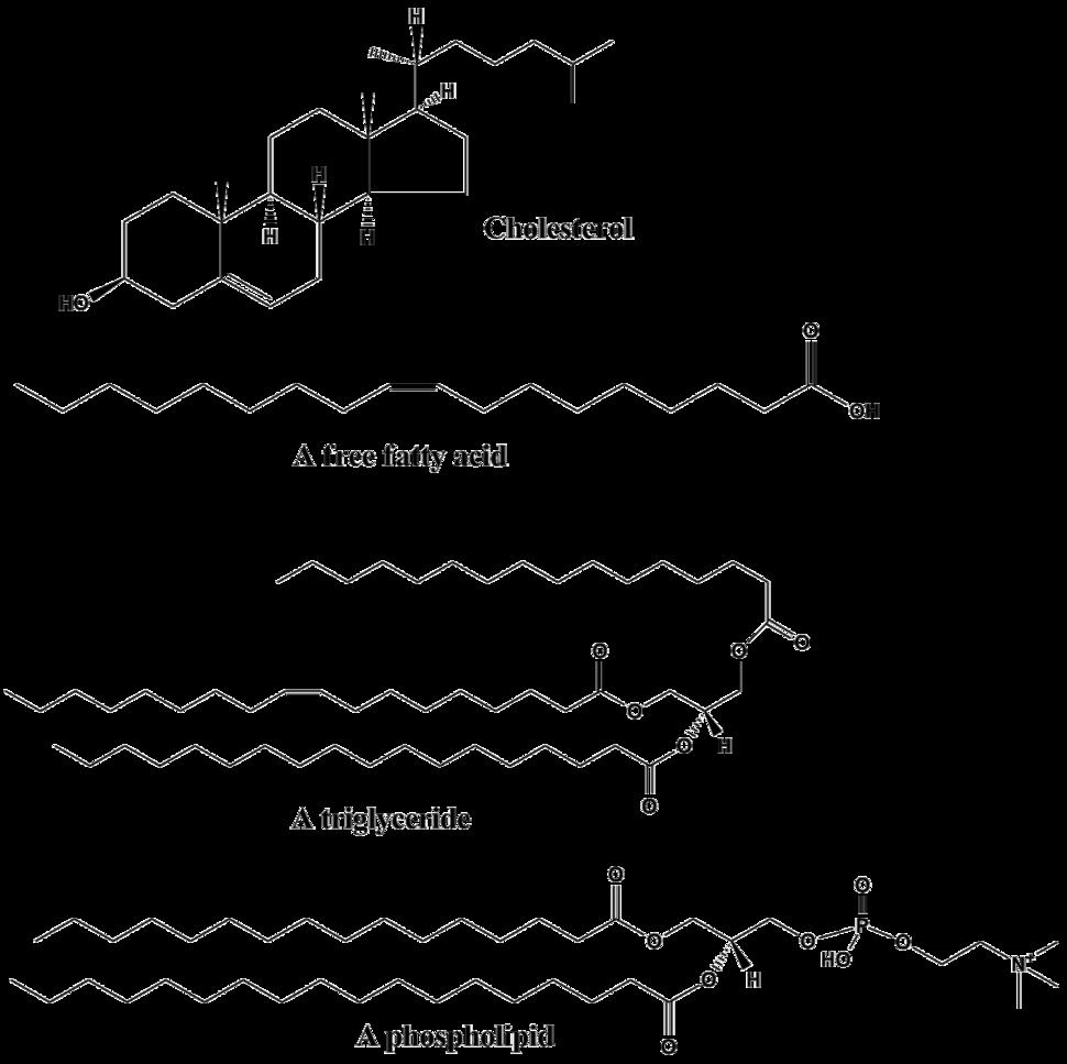Common lipids lmaps