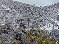 Conguillio's latest spring snowfall.jpg