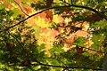 Conifer around Deciduous (2919995147).jpg