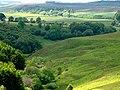 Contrast in greens - geograph.org.uk - 1356415.jpg