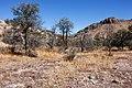 Cooney Canyon - Flickr - aspidoscelis.jpg
