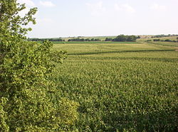 Corn fields in Southern Nebraska