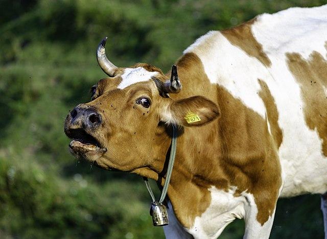 cow,Pitru Paksha hindi