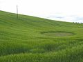 Crop pattern - geograph.org.uk - 752409.jpg