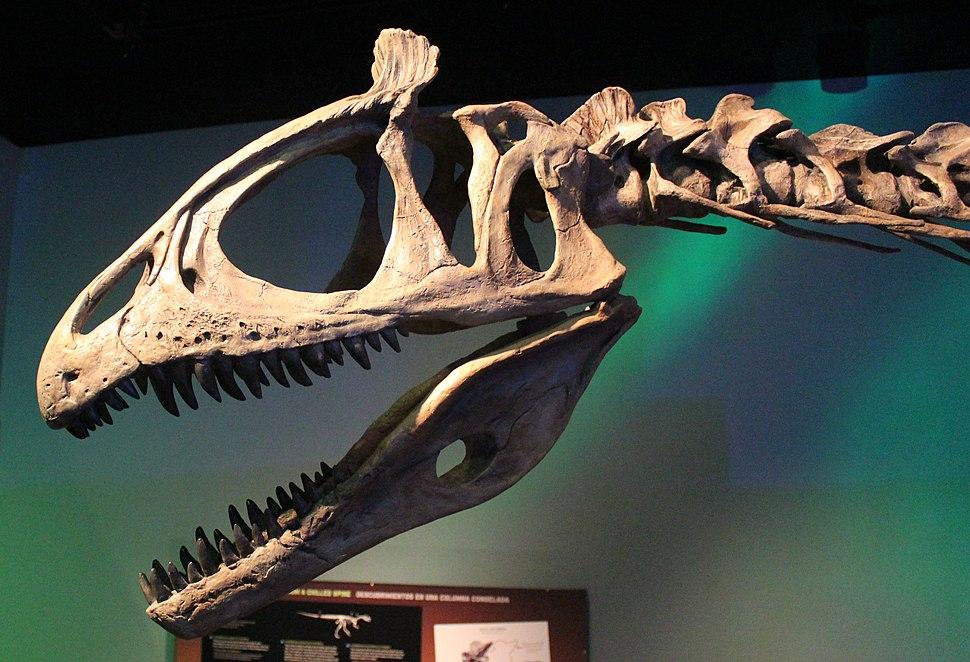 Cryolophosaurus skull reconstruction FMNH