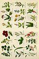 Culpeper's complete herbal BHL4747051.jpg