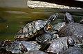 Cute Tortoise.jpg