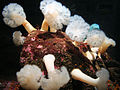 DSC26556, Monterey Bay Aquarium, California, USA (6364692123).jpg