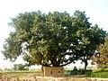 Darbar Baba Barkat (Grave ^ Borrd) - panoramio.jpg