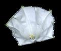 Datura-Metel flower.png