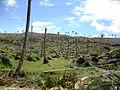 Deforestation in the wake of Typhoon Bopha in Cateel, Davao Oriental.jpg