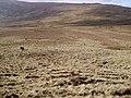 Descending Hesk Fell - geograph.org.uk - 343424.jpg