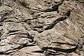Detail of rock formation on Tamar River tidal shoreline - geograph.org.uk - 468868.jpg