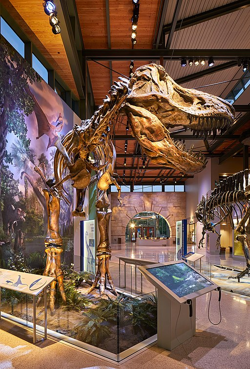 Witte Museum - Virtual Tour