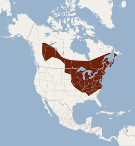 Distribution of Myotis septentrionalis.png